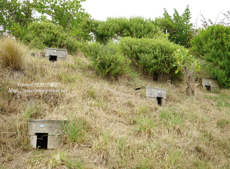 藍企鵝的窩(孵化箱)