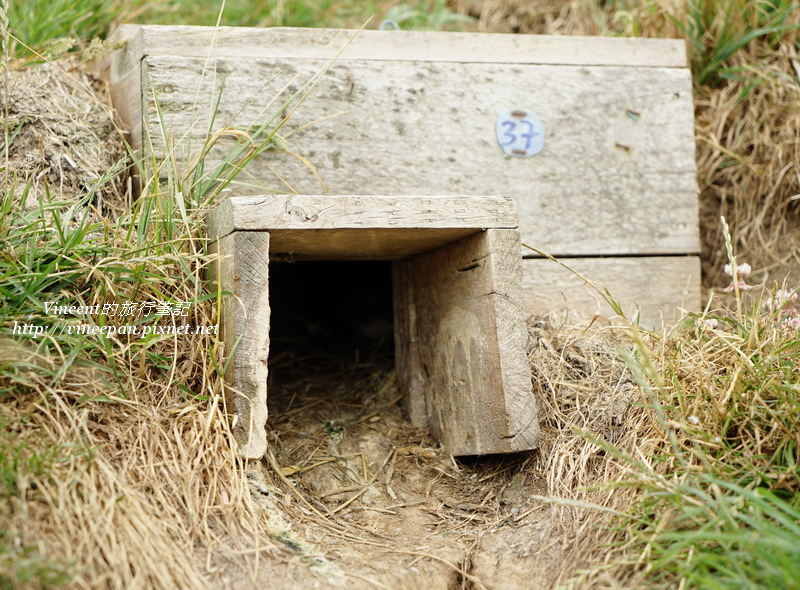 藍企鵝的窩