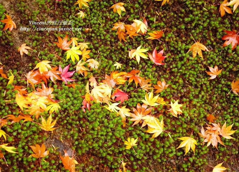 中離宮 草皮落葉