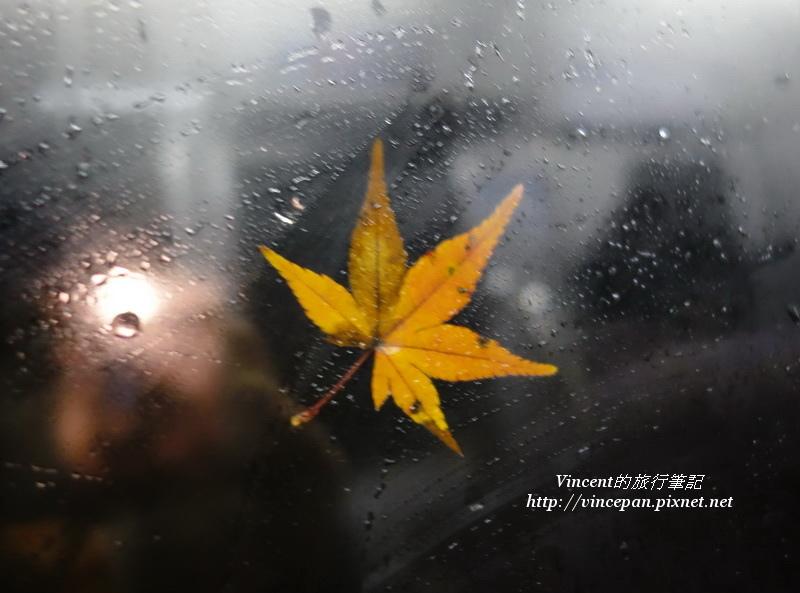 紅葉景觀列車 車窗