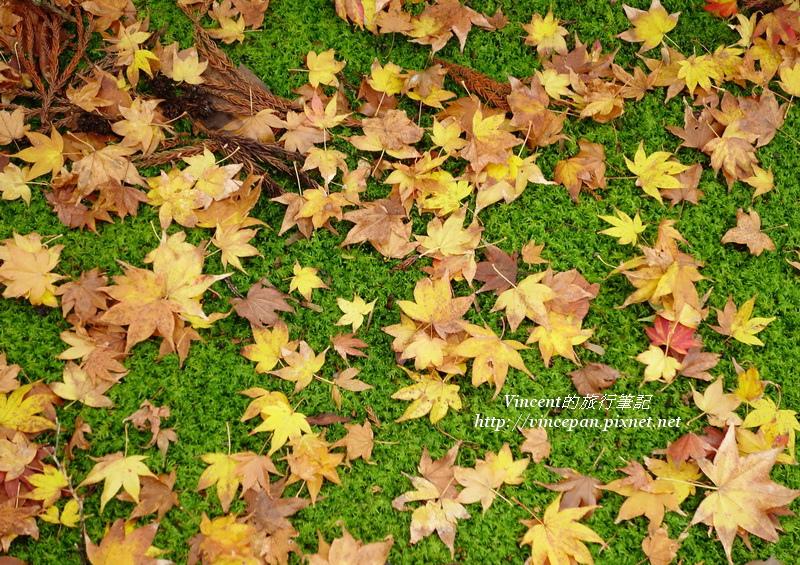 三千院落下的楓葉