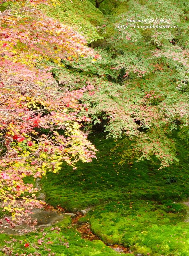 瑠璃光院紅葉2