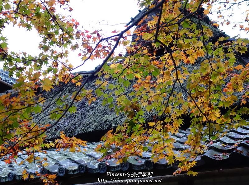 嘯月樓 楓葉