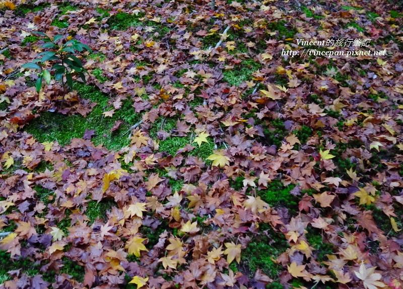 百花塢的落楓