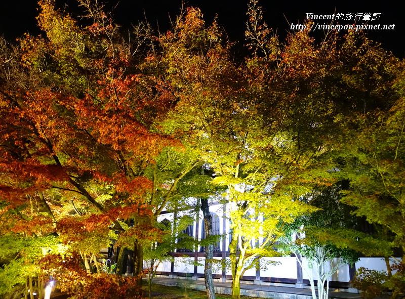 鶴壽台 楓樹