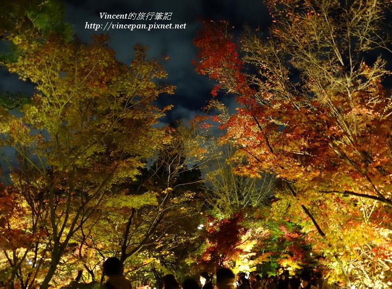永觀堂 夜楓1