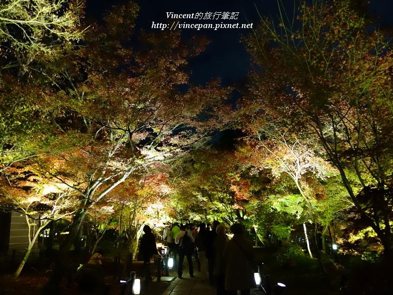 永觀堂 夜楓遊客