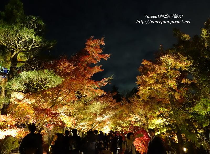 永觀堂 夜楓遊客1