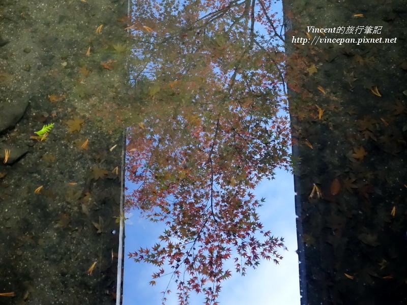 楓葉水池倒影