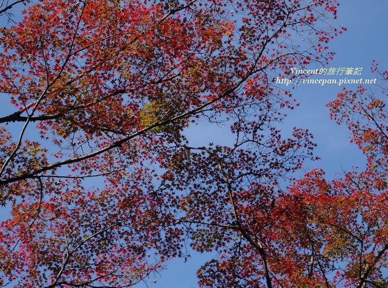 山路入口楓葉天空