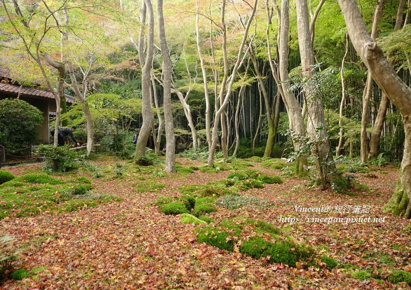 祇王寺 森林