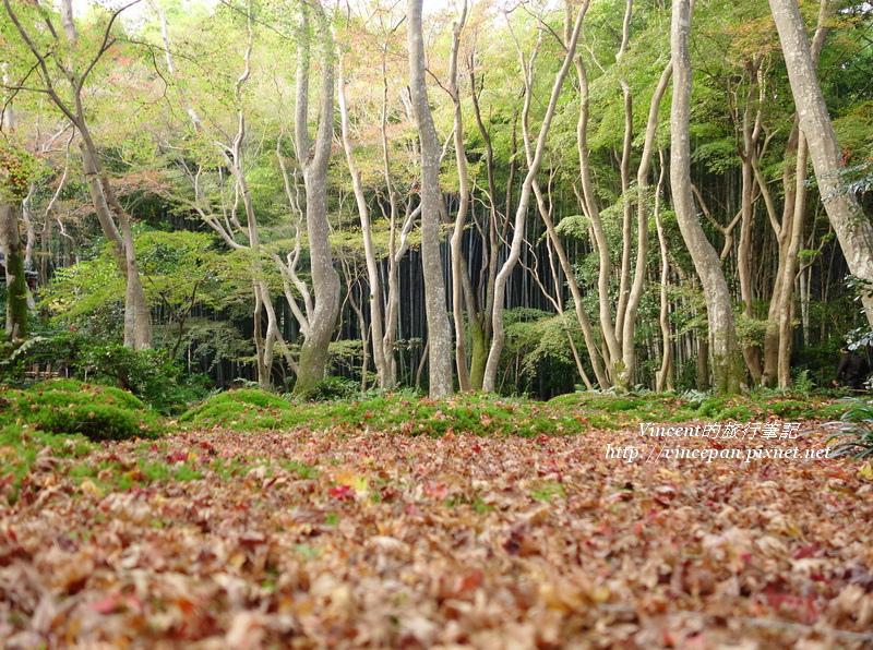 祇王寺 森林落葉