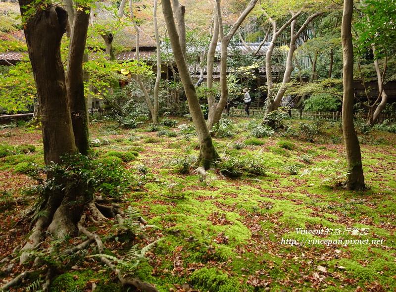 祇王寺 苔庭 樹1
