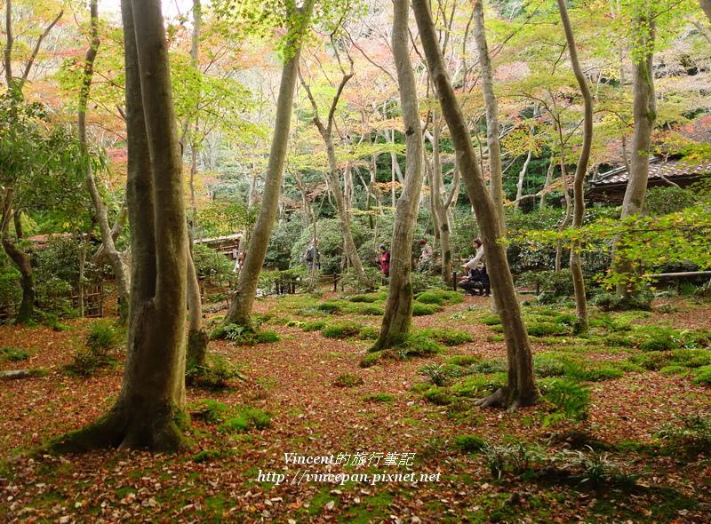 祇王寺 苔庭 樹2