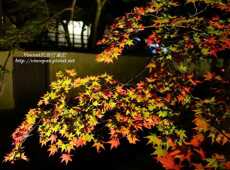 大覺寺 夜楓2