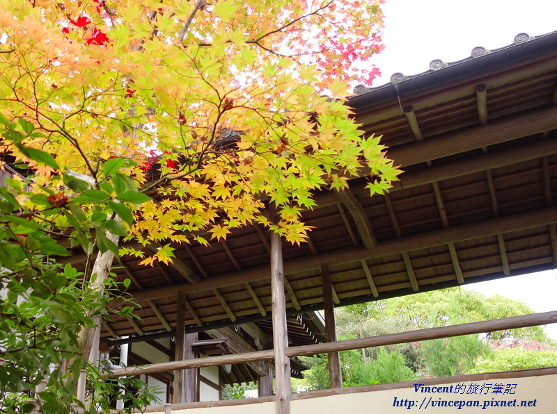 光悅寺中楓葉