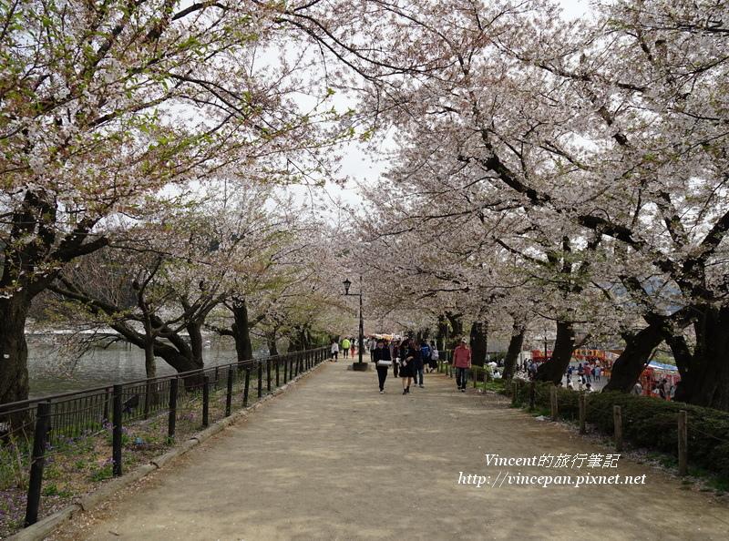 臥龍公園入口櫻花