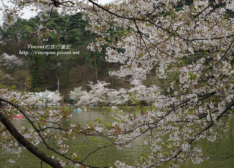 櫻花竜ヶ池