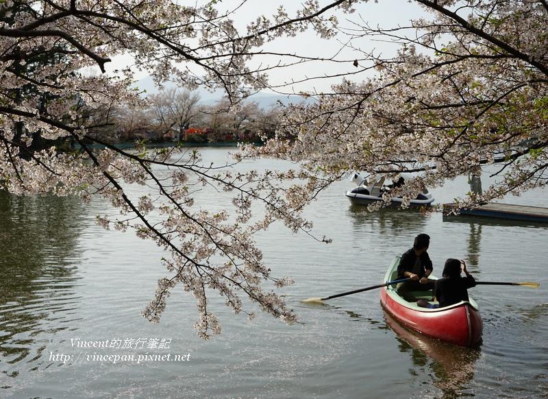 划船情侶櫻花