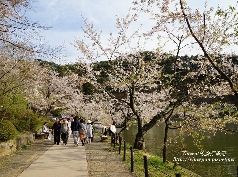 龍ヶ池旁走道 櫻花