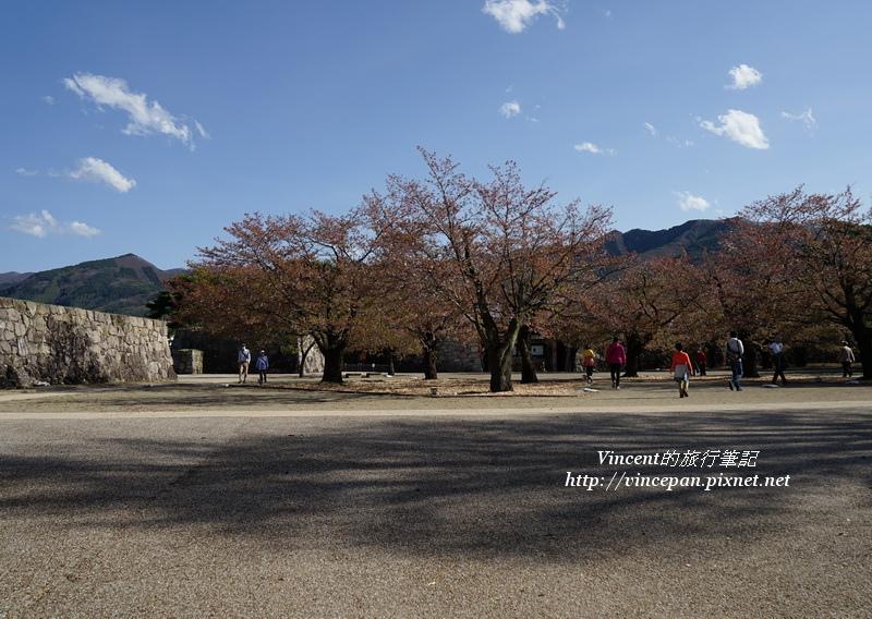 松代本丸廣場櫻花