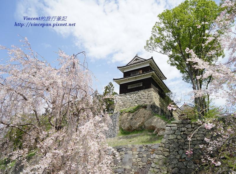 南櫓 櫻花
