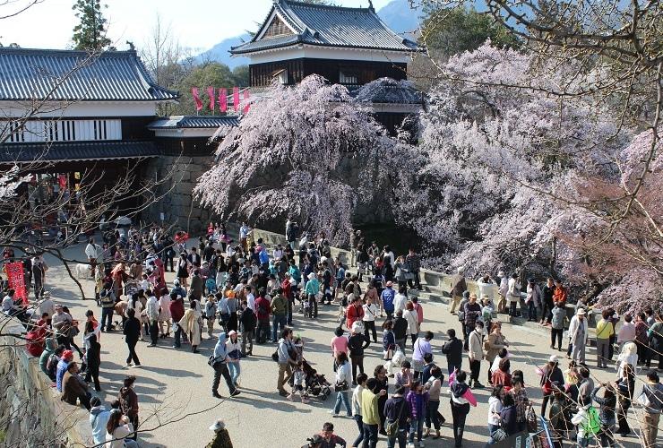 上田城櫻花祭