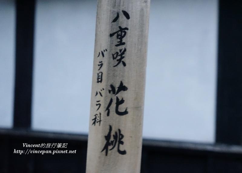 八重櫻花-花桃