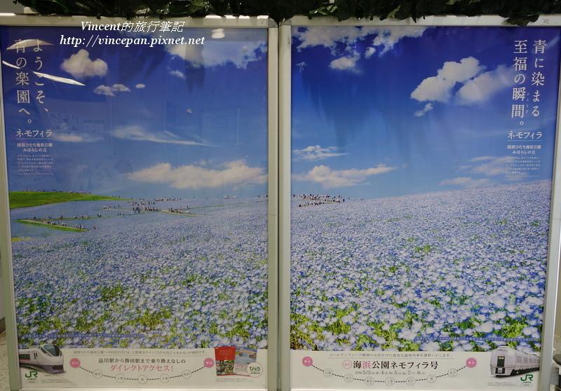 粉蝶花廣告海報