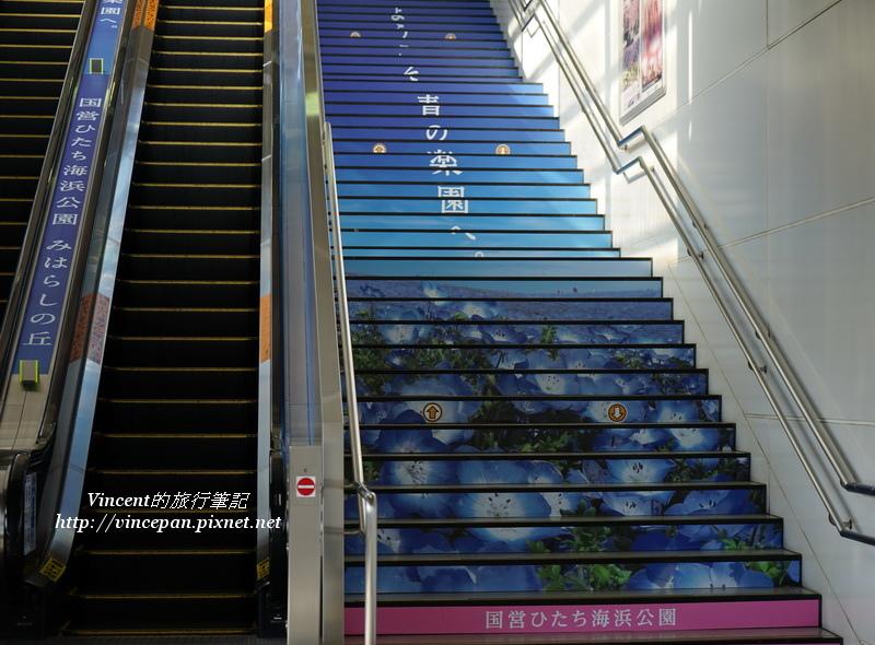 粉蝶花樓梯