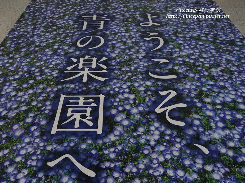 粉蝶花地板