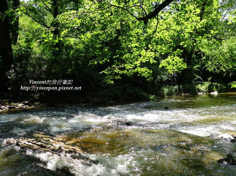 Nickajack Creek & tree