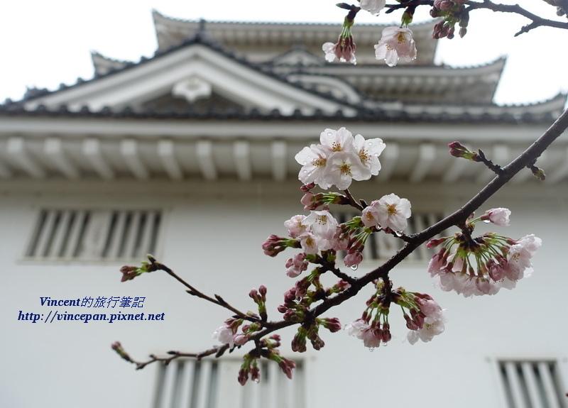福山城 櫻花