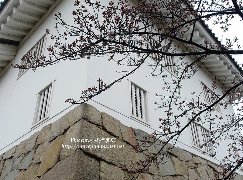 福山城櫻花樹