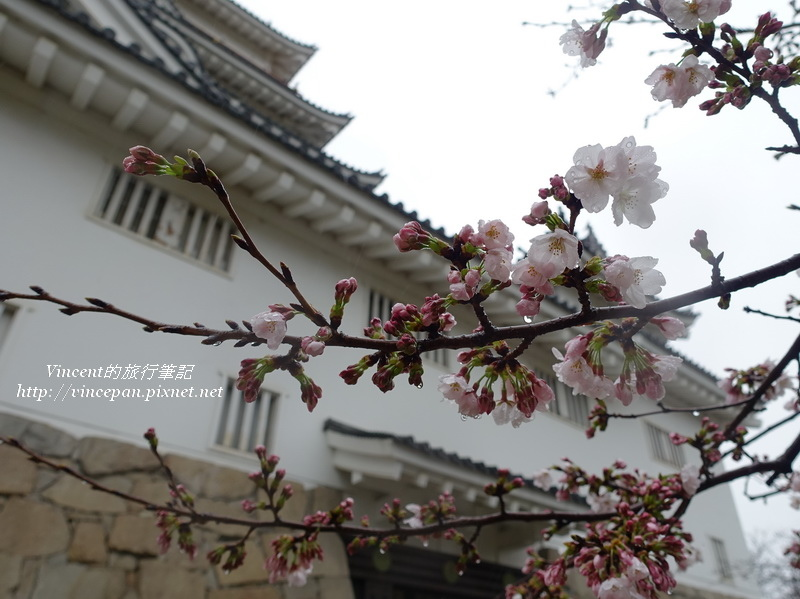 福山城 櫻花花苞