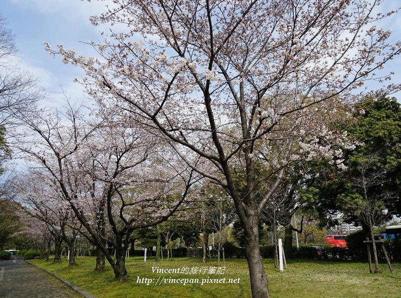 廣島城外櫻花