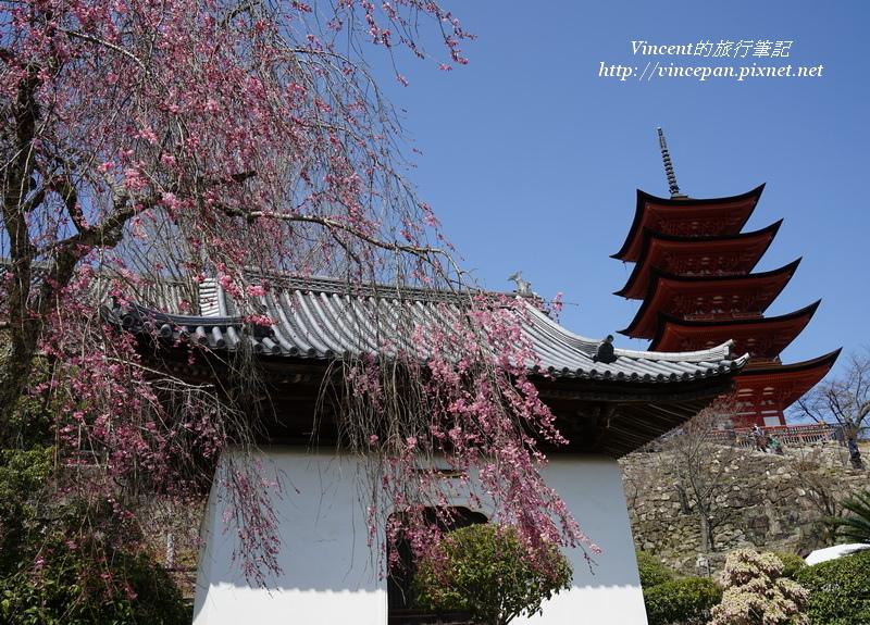 五重塔與櫻花