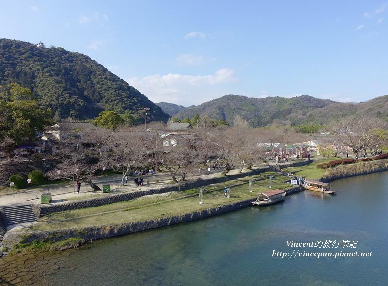 錦川櫻花樹