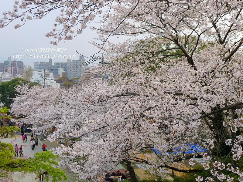 西公園階梯 櫻花