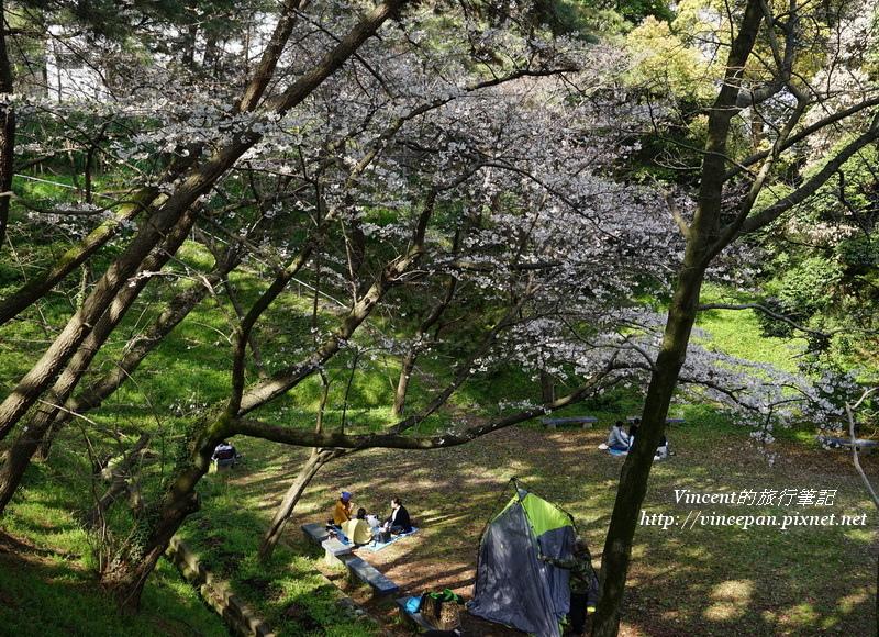 西公園櫻花下飲酒、露營