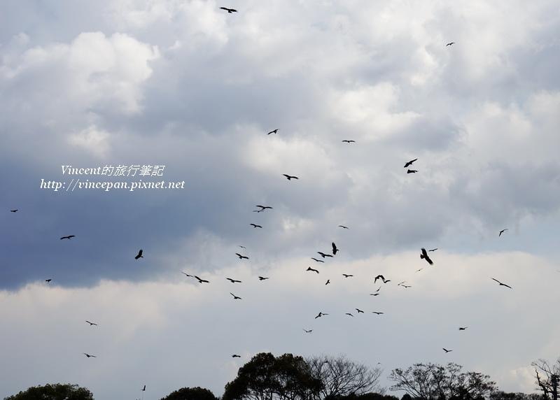 舞鶴公園 鳥群