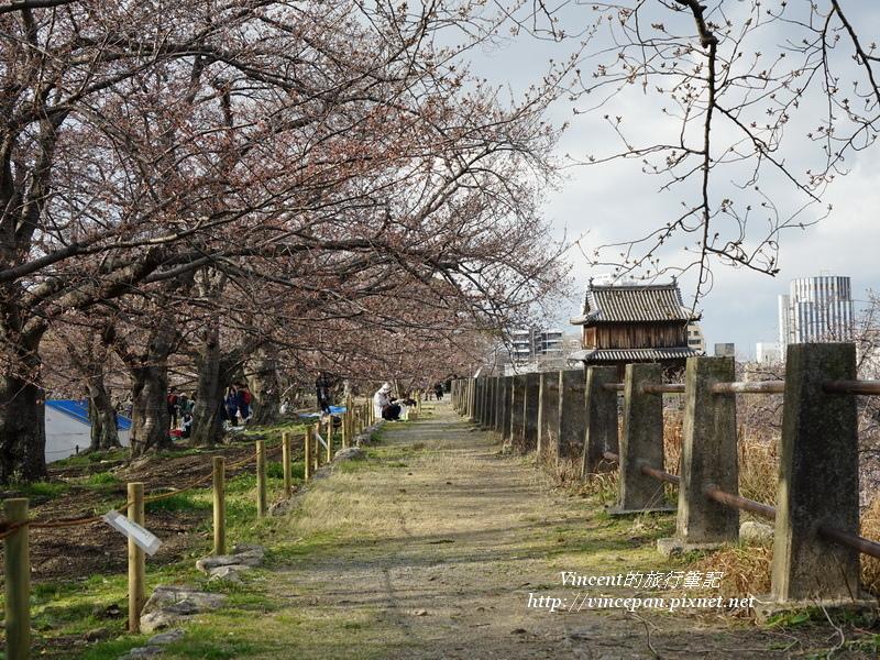 城牆 櫻花樹