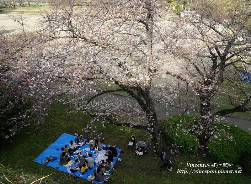 櫻花下野餐的民眾
