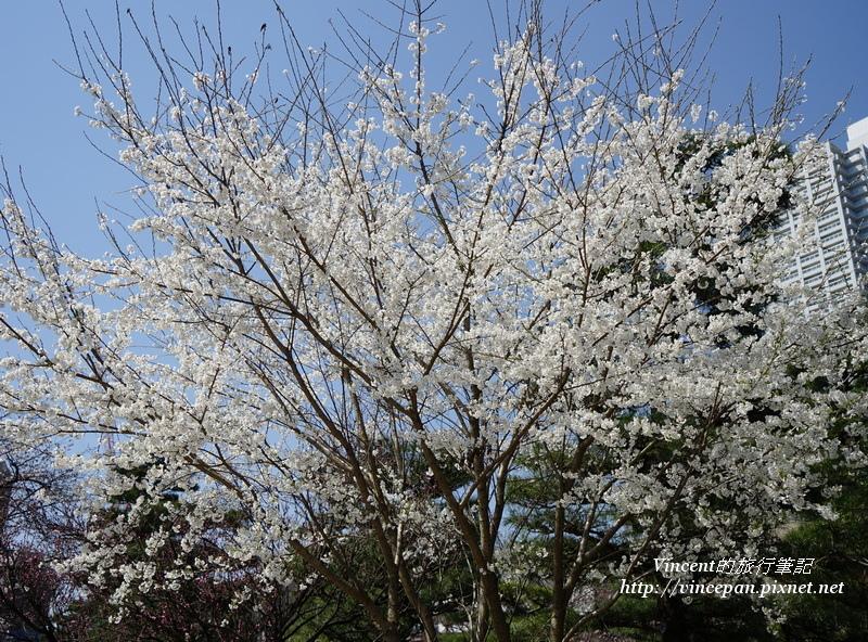 縮景園櫻花1
