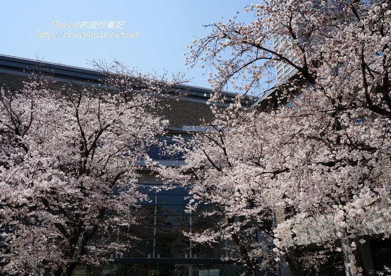 廣島美術館櫻花3