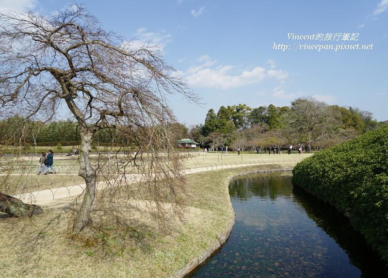 櫻花樹水道