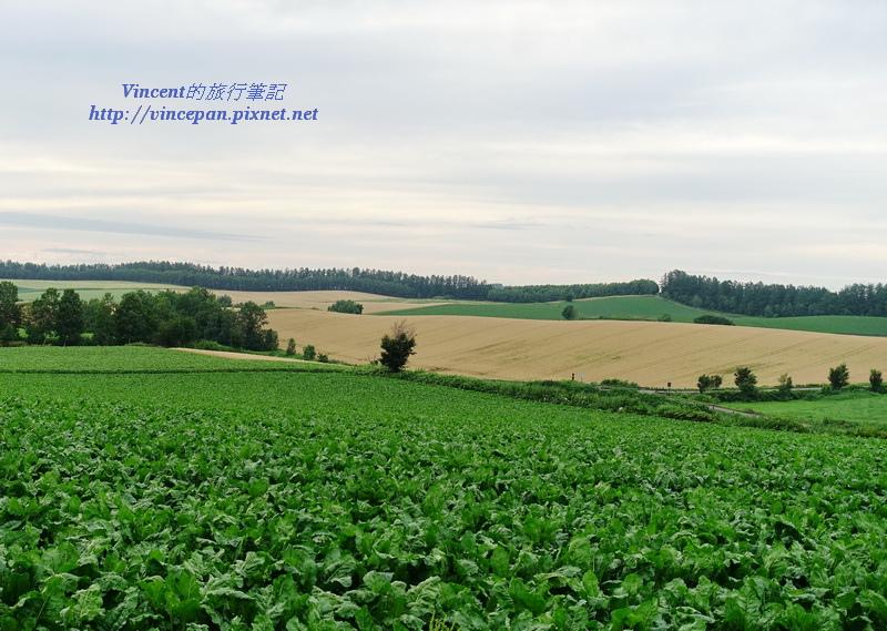 附近的農田
