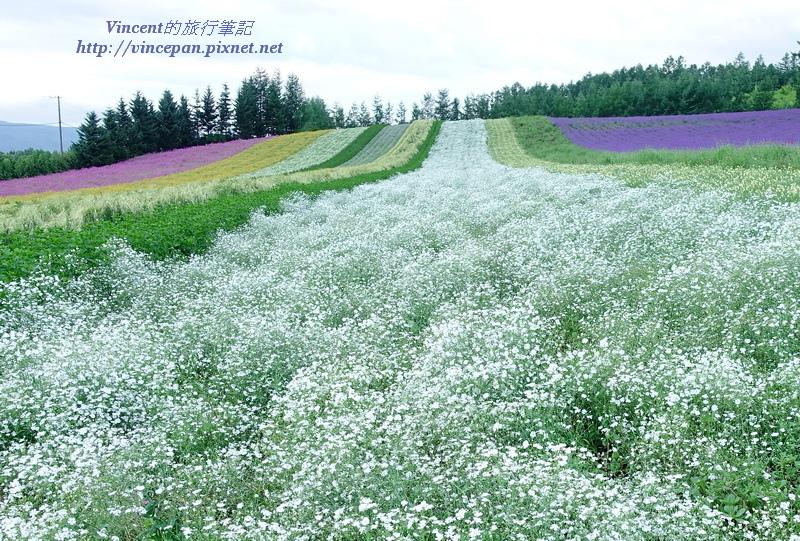 彩りの畑 白色