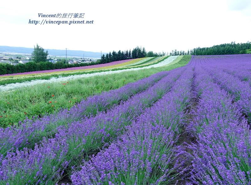 彩りの畑 薰衣草