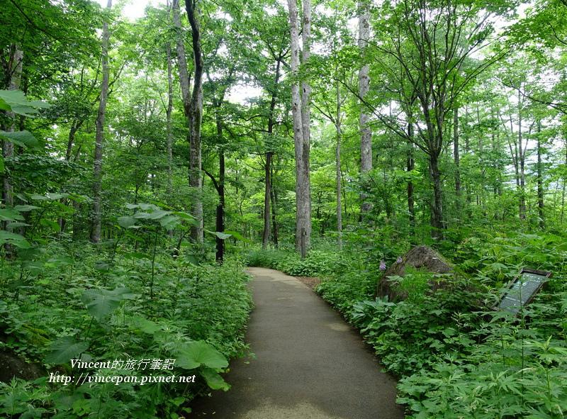 入口森林1